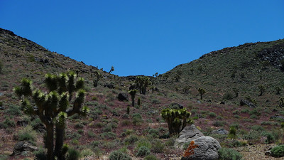 Just to the right of the notch is a wild horse. They peeked over the edge, saw us, and turned back to the mesa
