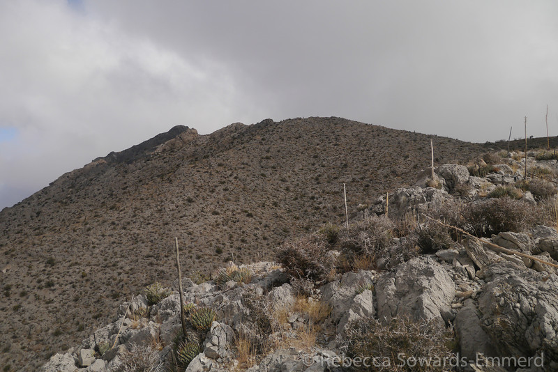 The summit on the left - the rocky band of black and while.