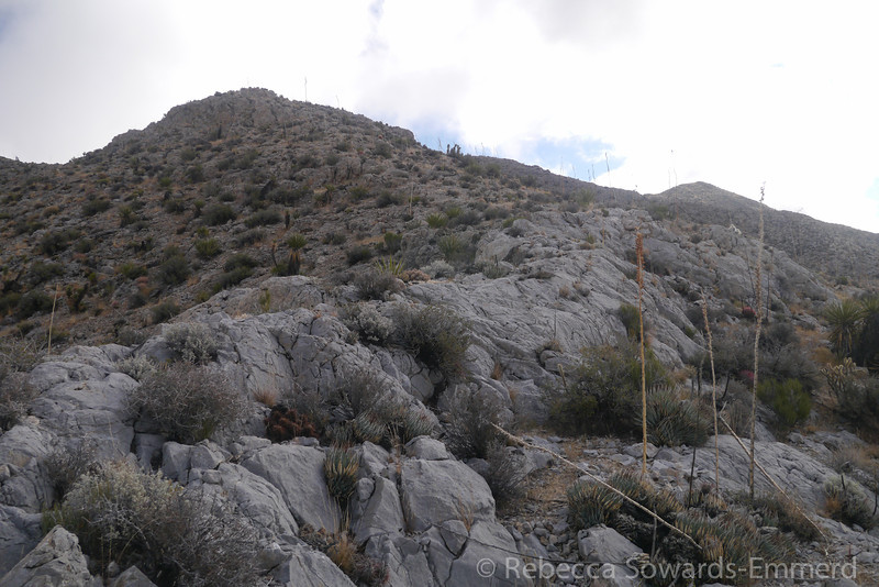 The ridge had some nice 'velcro rock' - sticky stuff that made for easy climbing.