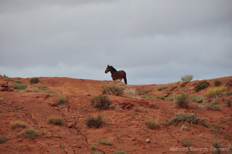One of the many wild horses wandering the reservation.