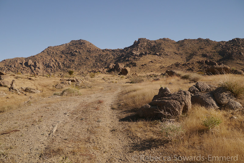 We visited the old townsite of Gold Butte