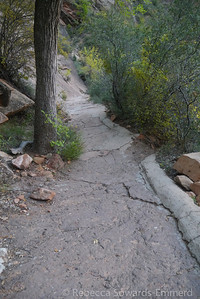 The trail is oddly paved.