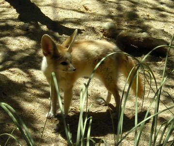 Foxy creature