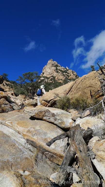 """Looking up at the pinnacle I labeled with the yellow arrow <a href=""""http://photos.calipidder.com/OutdoorAdventures/Thanksgiving2012/Part-2-Caruthers-Canyon-New/26788798_6LthZR#!i=2242970896&k=CcRxKQd"""">in a previous picture</a>. We'll climb to the base of it and then cut to the left around to the summit plateau."""
