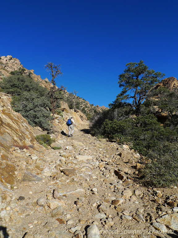 The road deteriorates as it heads up the canyon. This used to lead to the Giant Ledge mine (still does, I guess).