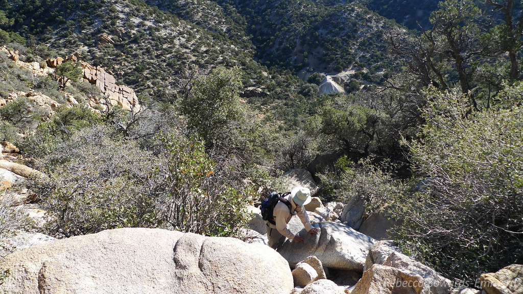 David looks down the ravine we've been scrambling up. That pile of dirt in the distance that he's looking towards is the diggings pile from the Giant Ledge mine near the bottom of Caruthers canyon.