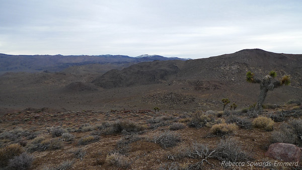Looking down on Cactus Flat