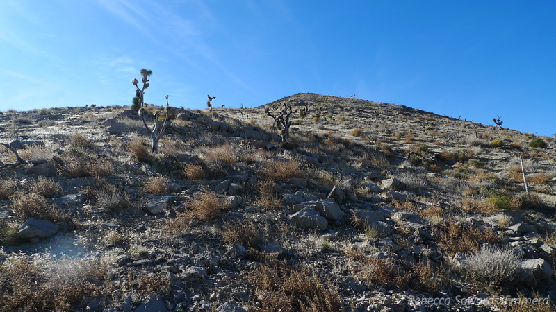 This peak is a simple hike that follows a ridge to a summit. We just head up along simple terrain.