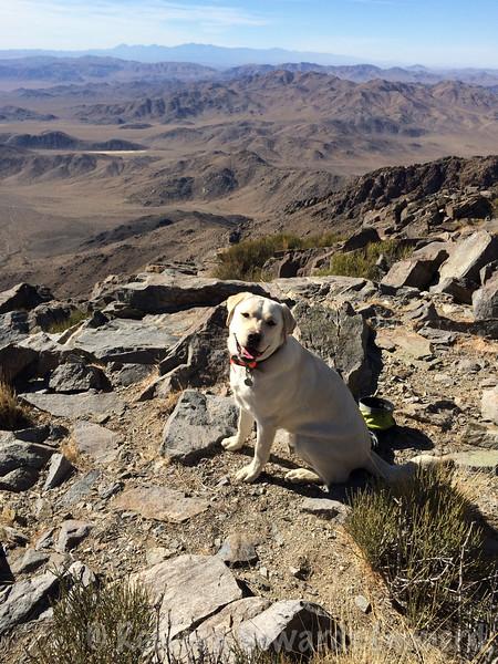 Thor on the summit!