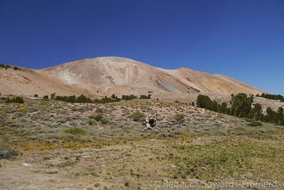 We drove up a bit further and parked around 10,600 ft.