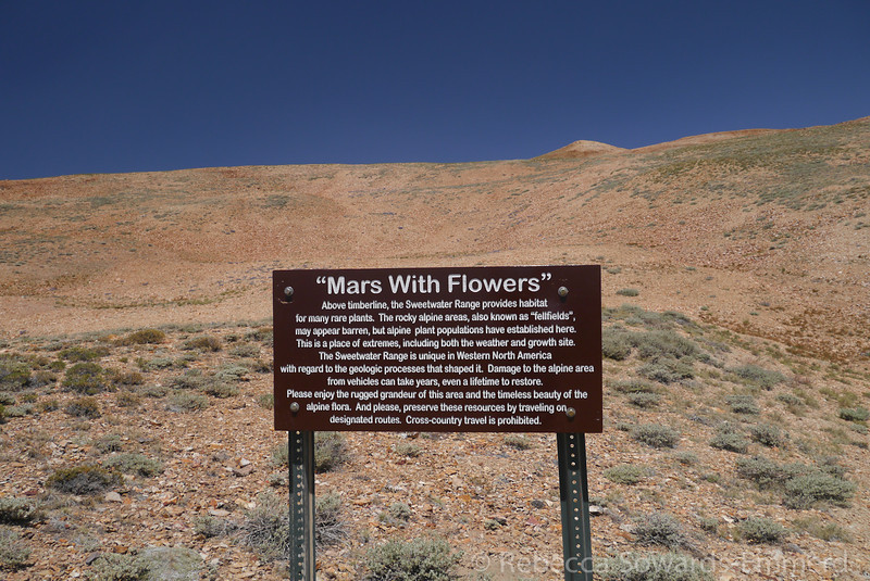 """""""Mars with Flowers"""" Yup."""
