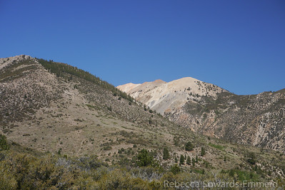 One of the ridges leading down from Mt Patterson. Already colorful.