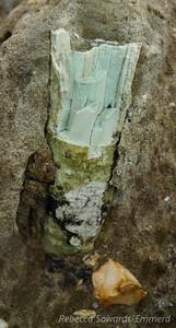 Small petrified wood branch