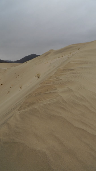 Wind erosion patterns on the dune crest