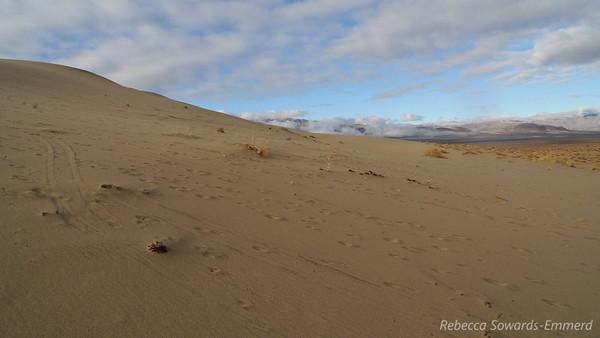The overnight rain had left the sand at a perfect consistency - I was able to walk on top of it and not sink in.