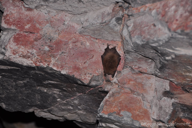 I looked up and saw a lot of bats. We took a few pictures then left the tunnel so as not to disturb them any more. Look at the feets! So cute.