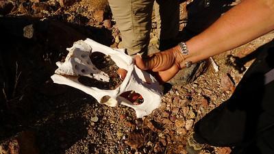 More sheep bones