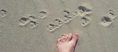 Animal tracks. And Dave's foot.