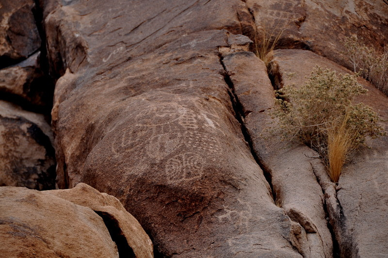 The glyphs here are mostly abstract with some sheep and lizard shapes. Unfortunately there is quite a bit of vandalism as well.