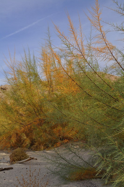 Colors in Afton Canyon