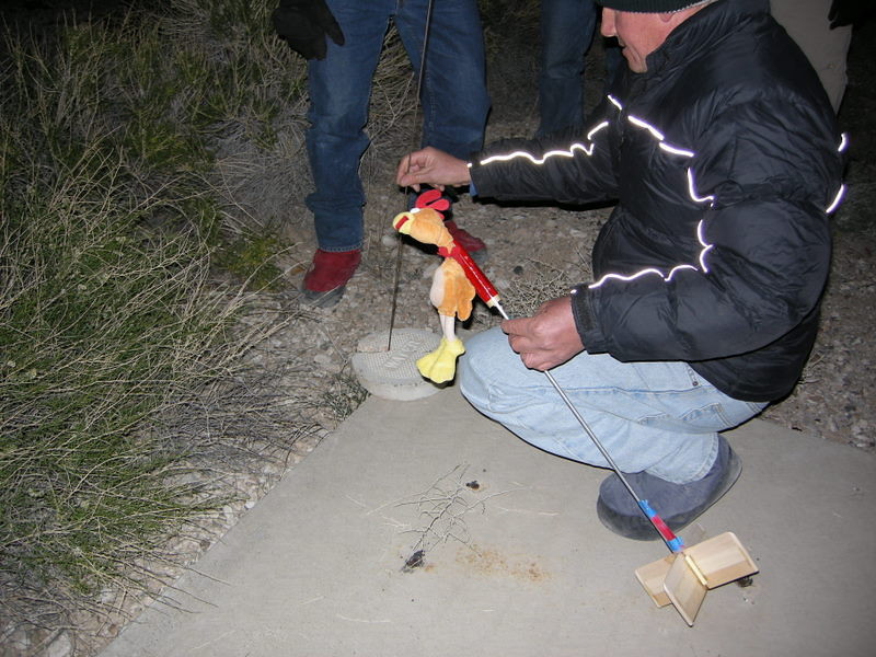 It was a lovely night for a chicken launch.<br /> <br /> ...don't ask.