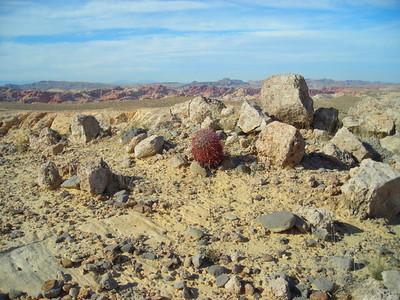 Barrel cactus.