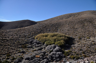 A spring was in there somewhere. Lots of wild burro prints in the area - in fact, we saw a few as we drove out.