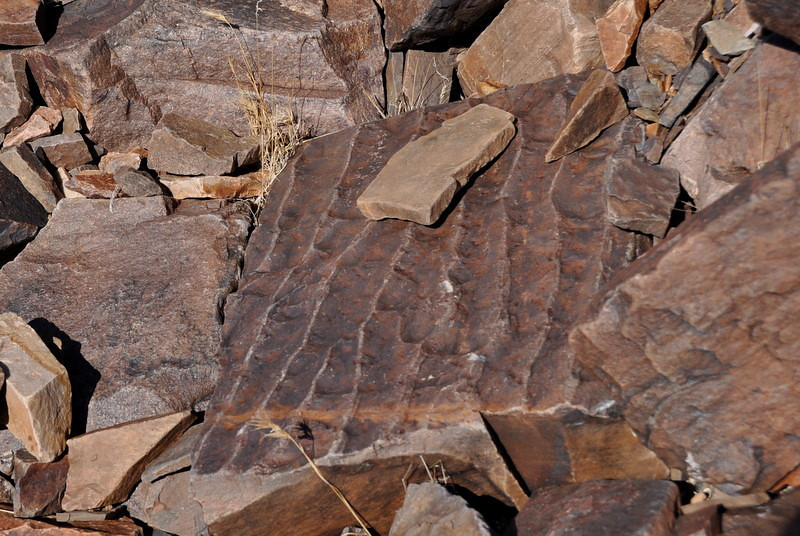 This rock was so cool - it looks like it used to be a sea or lakebed - see the 'ripples' like you see on a sandy ocean or lake floor?