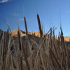Cat Tails at warm springs