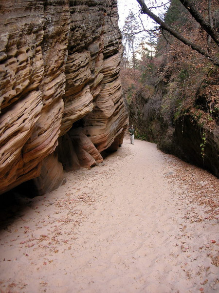 David walks through the canyon