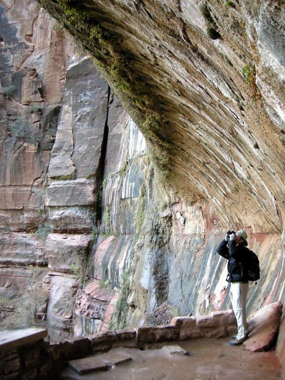 David under the Weeping Rock