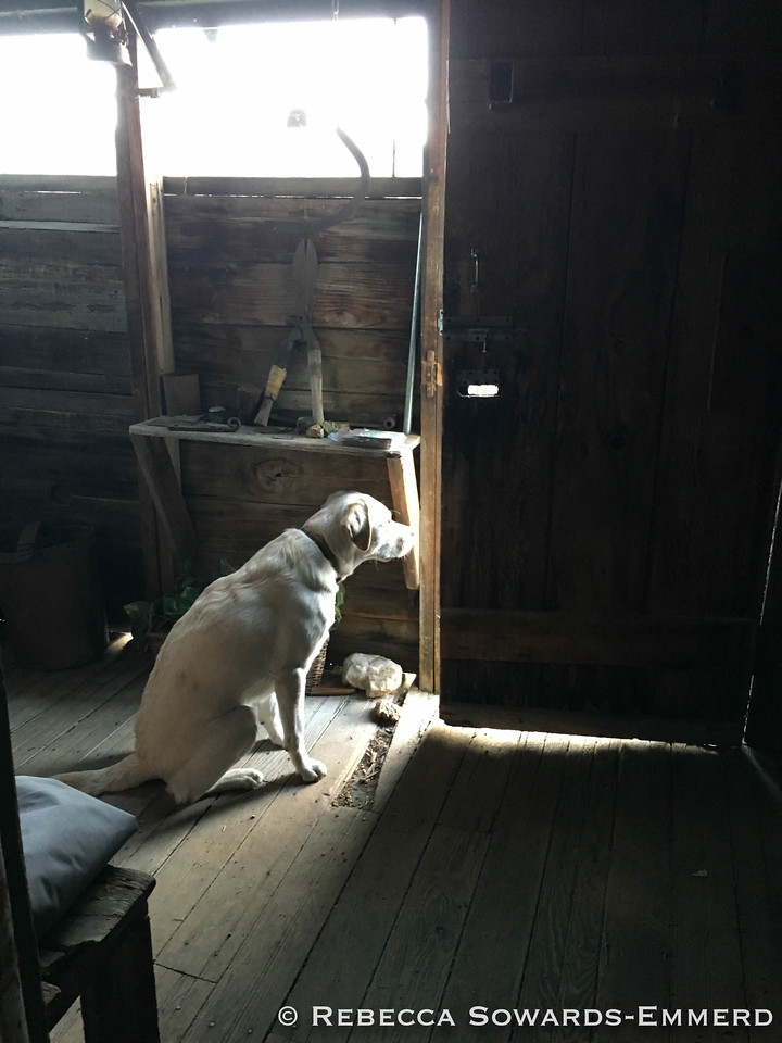 Thor the guard dog in our desert cabin