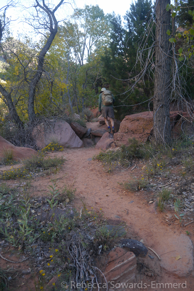 It's a nice trail at the start which then drops steeply to the canyon below.