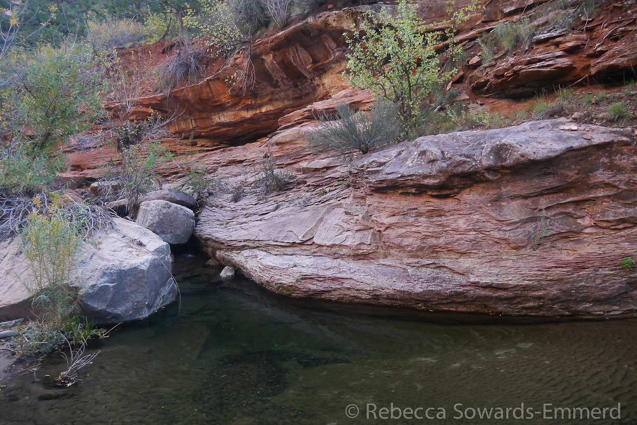 One of the many beautiful deep pools of clear water along the creek.