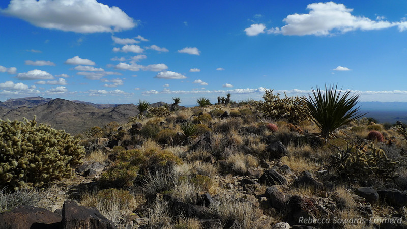 On the broad summit. Yes, lots of cactus.