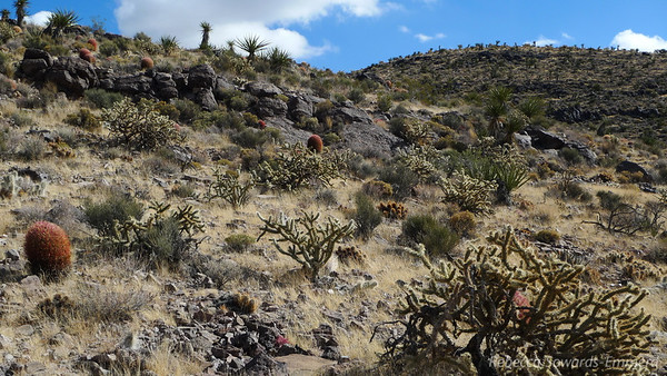 This hike had the biggest variety and quantity of cactus I have seen anywhere. Despite the occasional jab it was quite stunning and beautiful. It added a lot to the enjoyment of this rather simple and straightforward peak.