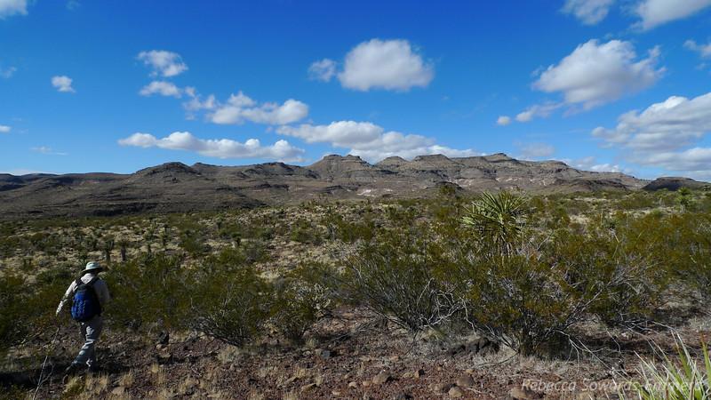 Heading back through the less-cactus-dense zone.