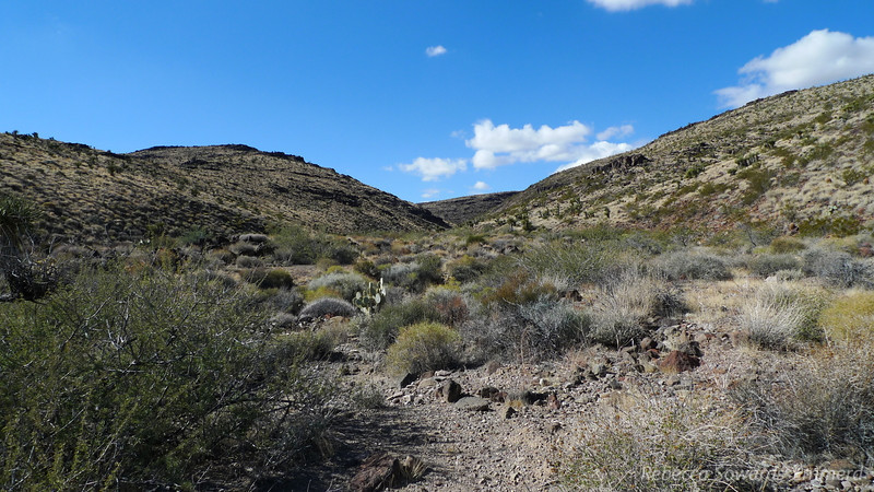 We headed up this wide canyon, following a narrow burro path through the cactus and brush.