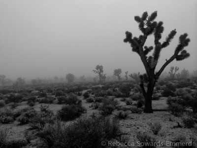 The foggy j-tree forest was a bit creepy.
