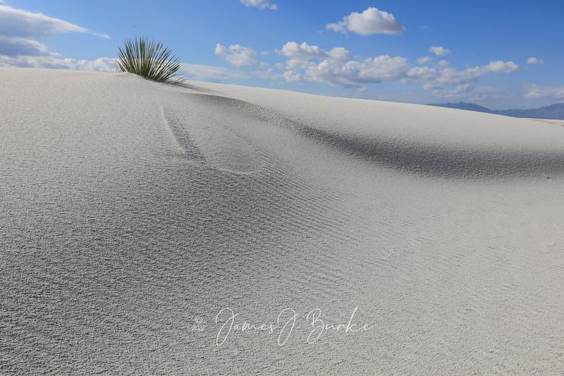 Super Dune