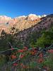 Trailside flowers - Zion National Park