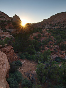 New Day - Zion National Park
