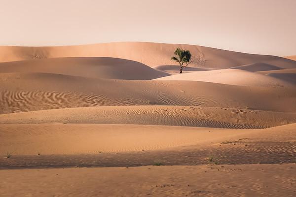 Arabian Dunes, UAE