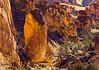Detail of Juniper Gulch, a fantastic side trail off Leslie Gulch.