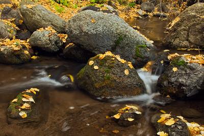 Fall leaves and moss on rocks along Jump Creek in Owyhee County, Idaho.