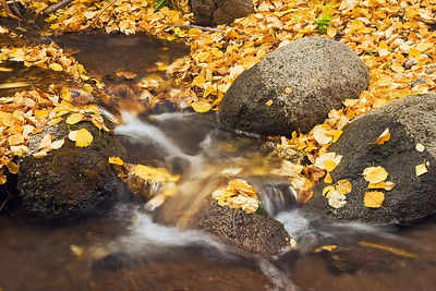Fall at Jump Creek.