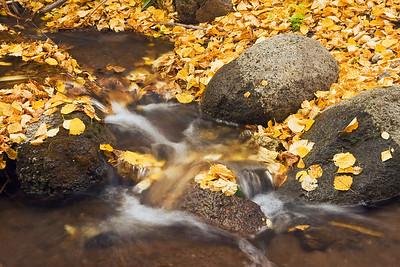 Fall at Jump Creek.