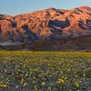 Desert Gold Sunset