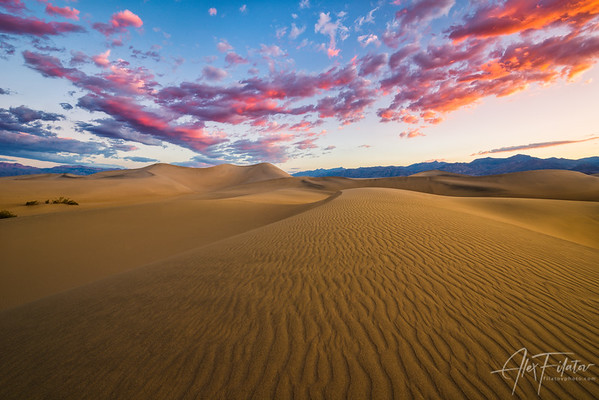 Mesquite Sunrise