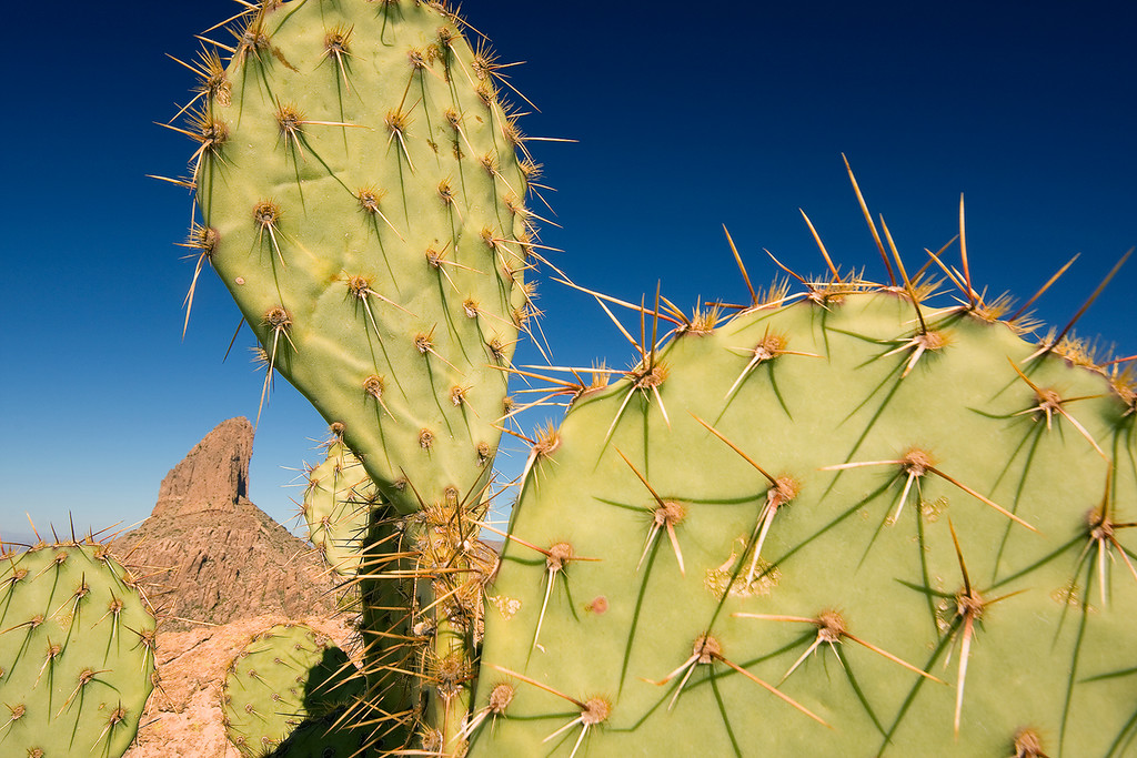 Prickly Pear and Weavers Needle